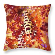 Pair Of Coleman Shrimp On A Red Throw Pillow