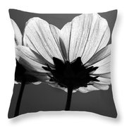 Pair Of Cosmia Flower Throw Pillow