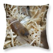 Pair Of Transluscent White Snapping Throw Pillow