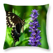 Palamedes Swallowtail Butterfly Throw Pillow