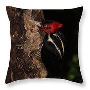 Pale-billed Woodpecker Throw Pillow