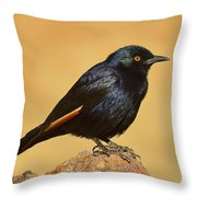 Pale-winged Starling Throw Pillow