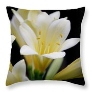 Pale Yellow Clivia Miniata Flowers Throw Pillow