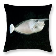 Paletail Unicornfish Throw Pillow