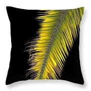 Palm Frond Against Black Throw Pillow