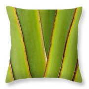 Palm Frond Detail Throw Pillow