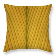 Palm Leaf Showing Midrib And Veination Throw Pillow