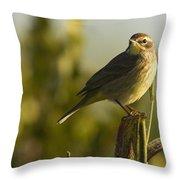 Palm Warbler, Everglades National Park Throw Pillow