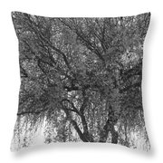 Palo Verde Tree 2 Throw Pillow