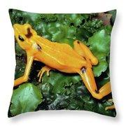 Panamanian Golden Frog Atelopus Zeteki Throw Pillow