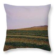 Panoramic View Of An Alfalfa Field Throw Pillow