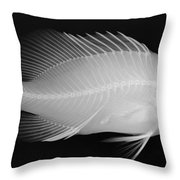 Panther Grouper X-ray Throw Pillow