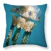 Papuan Jellyfish Mastigias Papua, Palau Throw Pillow