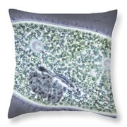 Paramecium Bursaria Throw Pillow by M. I. Walker