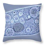 Paramecium Contractile Vacuoles Throw Pillow
