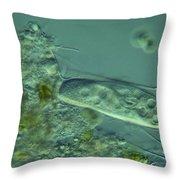 Paramecium Feeding Lm Throw Pillow