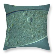 Paramecium Lm Throw Pillow