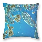 Paramecium Throw Pillow