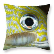 Parasitic Isopod On Grunt, Belize Throw Pillow