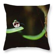 Parrot Snake Leptophis Ahaetulla Throw Pillow