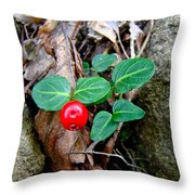 Partridge Berry Berry - Mitchella Repens Throw Pillow