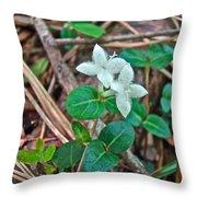Partridge Berry Flower - Mitchella Repens Throw Pillow