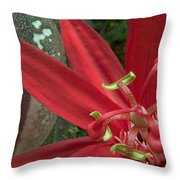 Passion Flower Blossom Costa Rica Throw Pillow by Piotr Naskrecki