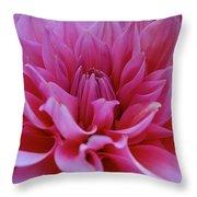 Pastel Pink Dahlia Throw Pillow