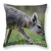 Patagonian Cavy Youngin Throw Pillow