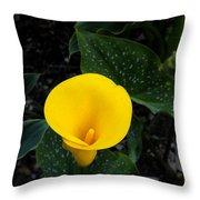Paute Farm Yellow Stunner Throw Pillow
