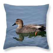 Peaceful Reflection- Female Gadwall Duck Swimming At The Pond Throw Pillow