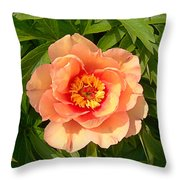 Peachy Blush Throw Pillow