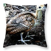 Peacock Baby Throw Pillow
