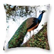 Peacock Calling Throw Pillow