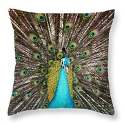 Peacock Plumage Feathers Throw Pillow