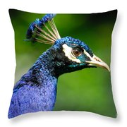 Peacock Portrait Throw Pillow by John Kelly