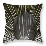 Peacock Tail Graphic Throw Pillow