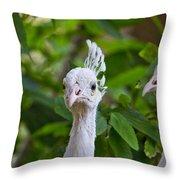 Peacocks Throw Pillow