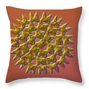 Pediastrum Sp. Algae, Lm Throw Pillow