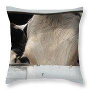 Peek-a-boo Cow Throw Pillow