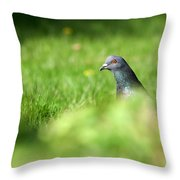 Peek-a-boo Pigeon Throw Pillow