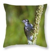 Peekaboo Birdie  Throw Pillow