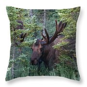 Peeking Through The Spruce Throw Pillow
