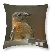 Peeping Bluebird Throw Pillow