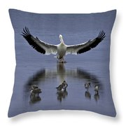 Pelican Protector - Florida Wildlife Scene Throw Pillow