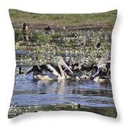Pelicans At Knuckey Lagoon Throw Pillow
