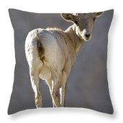 Peninsular Bighorn Sheep Ovis Throw Pillow