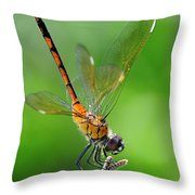 Pennant Dragonfly Obilisking Throw Pillow