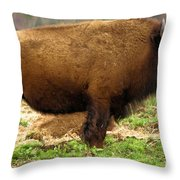 Pennsylvania Bison Throw Pillow