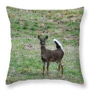 Pennsylvania White Tail Deer Throw Pillow